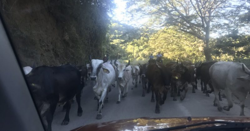Sayulita Traffic Jam